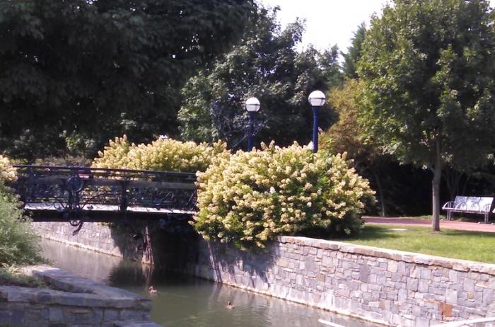 Carroll-Creek-Bridge-2