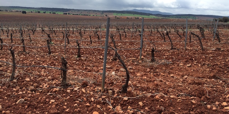 Valdepenas vineyard scene
