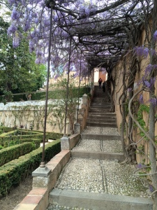 generalize alhambra upper garden wisteria