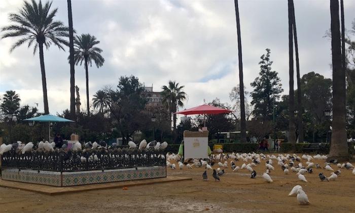 white pigeons Sevilla Spain