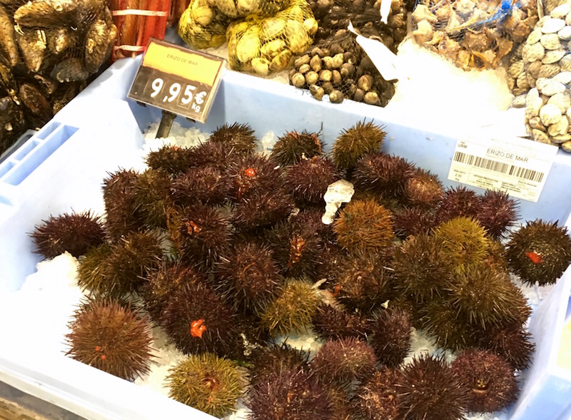 Sea Urchin Mercadona Final