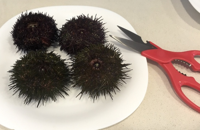 Sea Urchin on plate Final