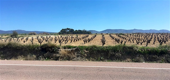 Utile-Requena wine country vineyards spain