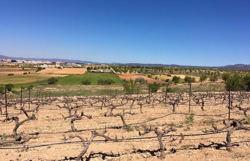 Vera de Estenas vineyards Utiel