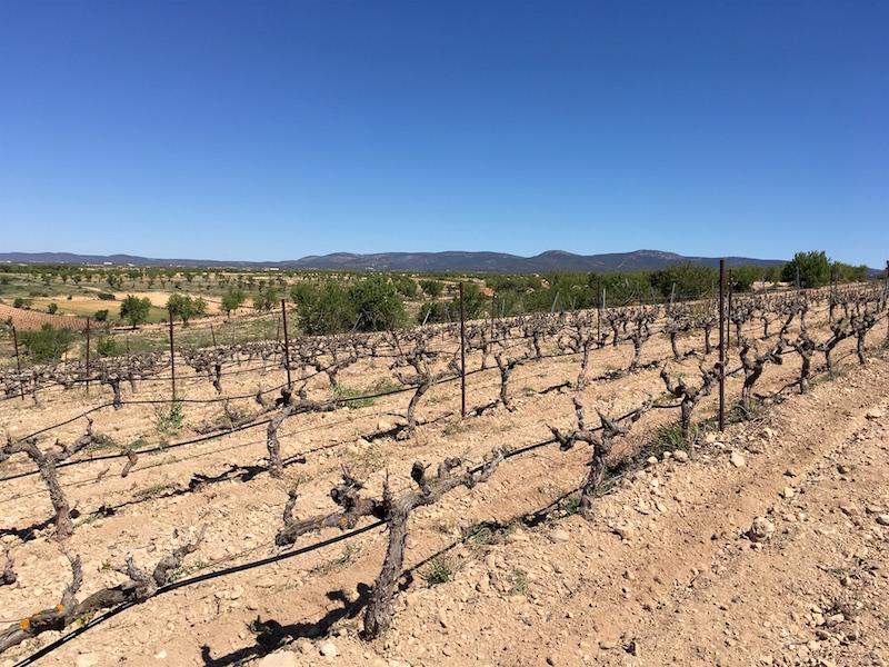 Vera de Estenas vineyard