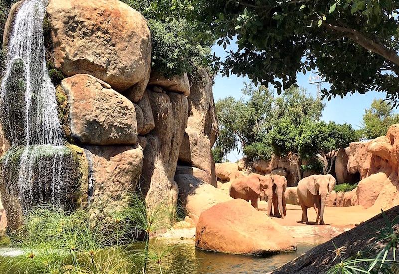 Elephants Bioparc Valencia Spain Zoo