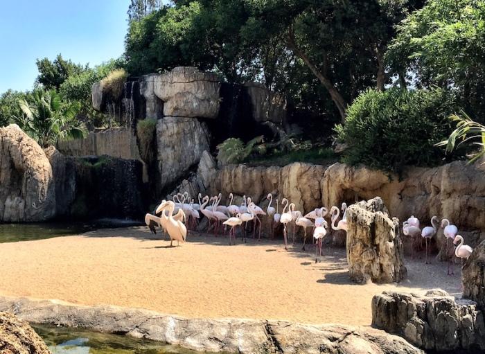 Flamingos Bioparc Valencia Zoo Spain