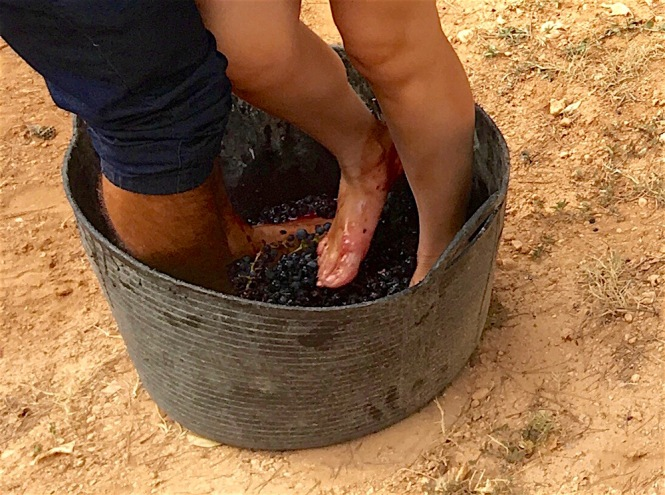 Grape-stomping-feet-2