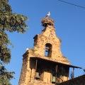 white stork nest on church bell tower