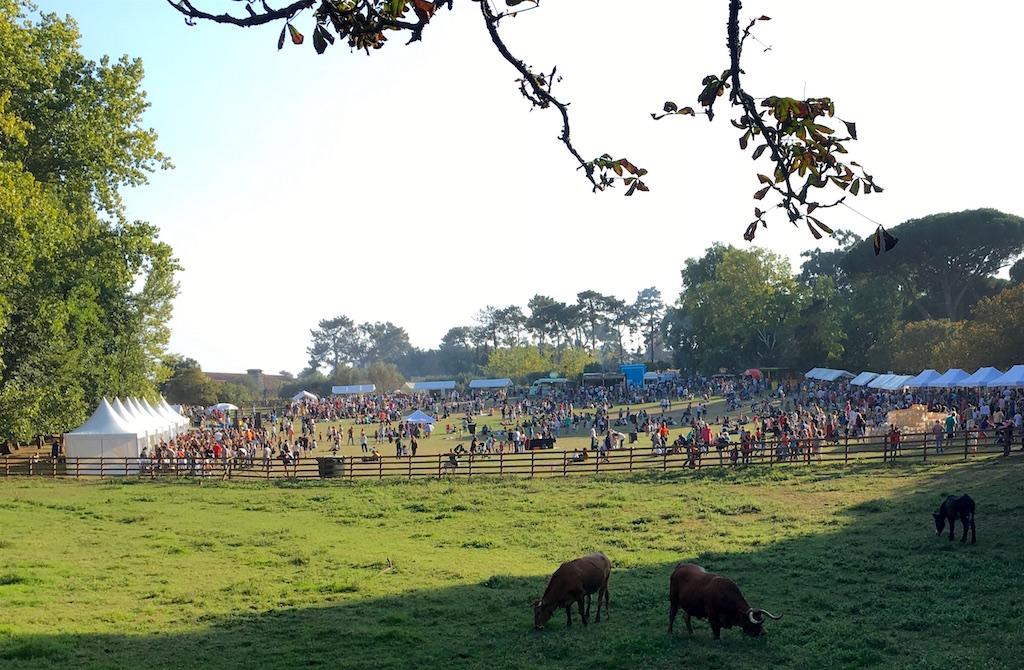 Serralves park Autumn festival