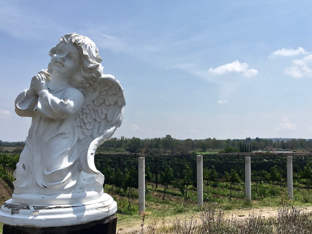 Viñedo Toyan angel in vineyard
