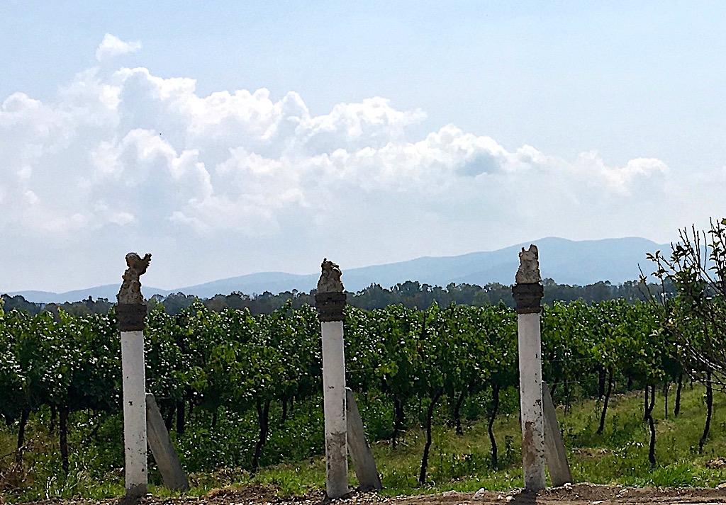 Viñedo Toyan vineyard san miguel de allende