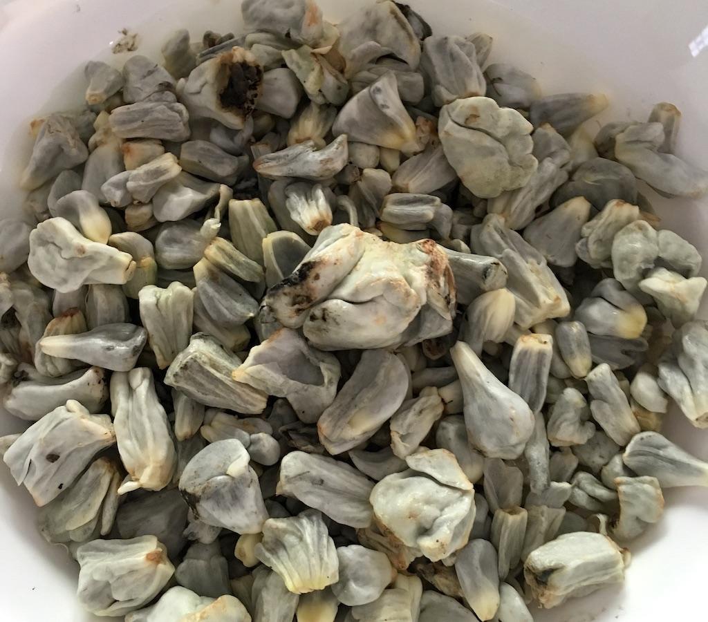 huitlacoche corn kernels
