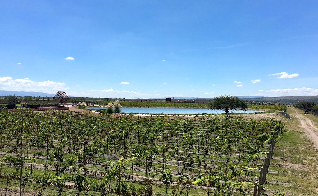 Tres Raices Vineyard view Guanajuato Mexico winery