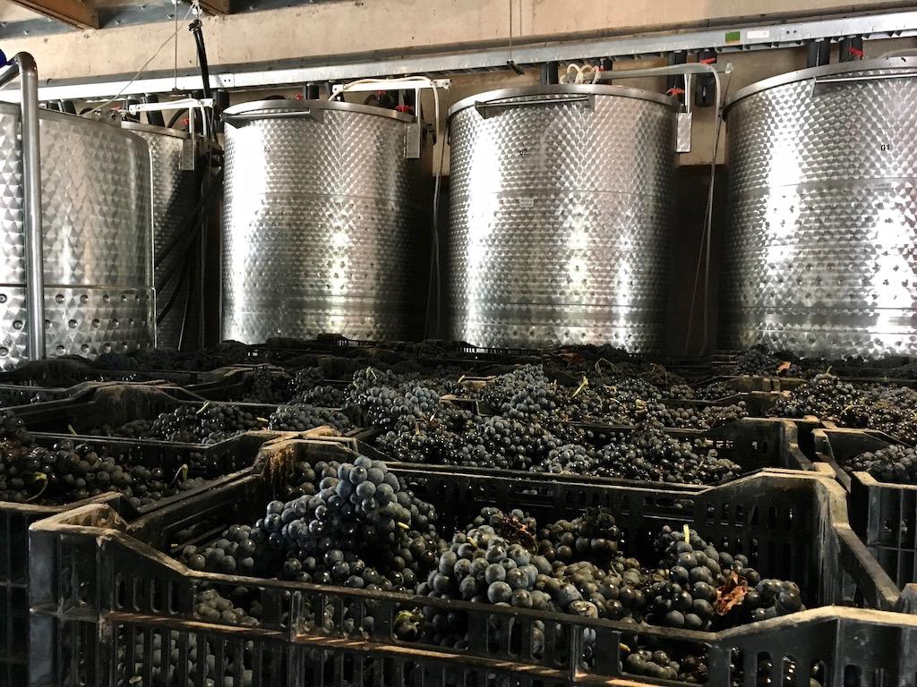 crates of grapes cuna de tierra