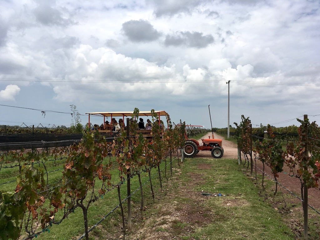bodegas vega manchon vineyard wagon tour